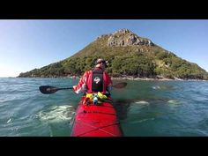 An Orca named 'Pickle' - YouTube New Zealander Nathan Pettigrew and a wild orca named Pickle have been gliding across the crystal clear waters of Welcome Bay in Tauranga for years.