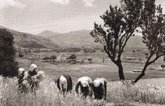 Μεσσαρά, 1939, φωτό: Nelly's – Μάζεμα σταχυών