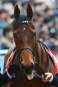 10+ マカヒキかわいい ideas in 2020 | horses, animals, horse racing
