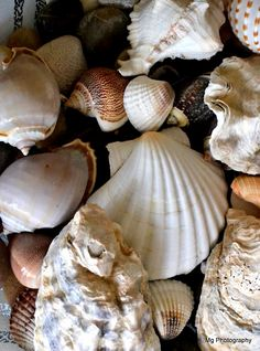 Sea Shells   Mg Photography