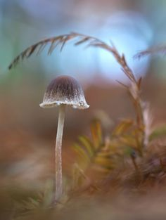Small mushroom in a November forest via orest.bplaced.com