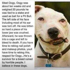 Meet oggy
