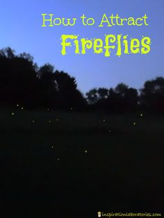 How to Attract Fireflies - learn tips for calling them in plus fun facts and book suggestions.