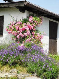 Te cudowne , wiejskie ogrody.