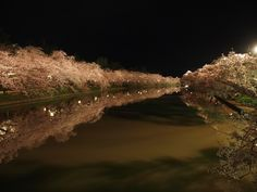 Cherry blossoms at night in Hirosaki, Japan. I have been to this exact spot, Chris and I even rowed a boat down that river!