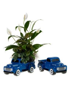 Ford Pickup Dish Garden A ceramic model of the 1948 Ford pickup truck holds an assortment of foliage plants. (Height will vary) Item# 1829 Dish Garden, Foliage Plants, Pickup Trucks, F1, Ceramics, Model, Scale Model, Ceramic Art