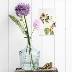 Allium to decorate home and garden