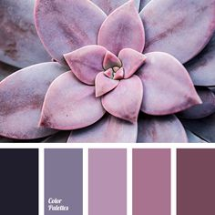 Color palette { purple color } #2707
