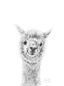Lama Draw a Portrait – Hannah Wall Art - Crafts Diy Alpacas, Animal Sketches, Animal Drawings, Art Drawings, Drawing Animals, Drawing Artist, Drawing Sketches, Lama Animal, Alpaca Drawing