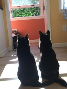 http://ift.tt/2ty50mX two black and white cats (you can't see the white)