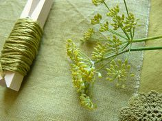 dyeing with fennel and alum