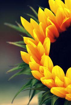 20 Spectacular Examples of Macro Photography - UltraLinx Sunflower Garden, Sunflower Fields, Yellow Sunflower, Happy Flowers, Beautiful Flowers, Sun Flowers, My Flower, Flower Power, Vincent Willem Van Gogh
