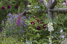Helen's Cottage Garden