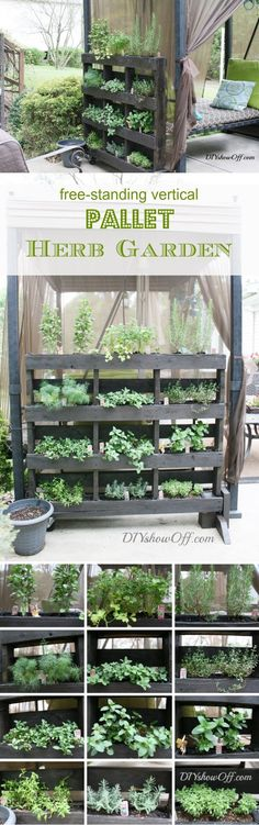 DIY Vertical Pallet Garden Project : Free Standing Pallet Herb Garden Tutorial : Simple veggie garden for balcony - Another! Balcony Herb Gardens, Small Herb Gardens, Outdoor Gardens, Vertical Gardens, Indoor Outdoor, Herb Garden Pallet, Diy Garden, Herbs Garden, Vertical Pallet Garden