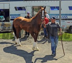 California Chrome (May 20, 2014) Kentucky Derby and Preakness winner California Chrome, led by asst. trainer Alan Sherman, arrives at Belmont Park, and is greeted by the New York media.... Rick Samuels Photo