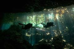 Fascinating and a bit scary at the same time. Cenotes. El Eden Cenote.