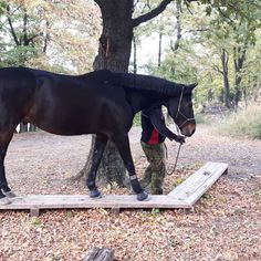 Extreme Trail in Österreich - Extreme Trail Park Sommerein Horse Barns, Horse Tack, Extreme Trail, Trail Riding Horses, Horse Exercises, Horse Treats, Types Of Horses, Horse Quotes, Horse Training