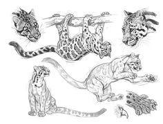 Hermes celebra a los felinos de Robert Dallet en un hermoso libro - Hermes lo hace . Anatomy Sketch, Cat Anatomy, Animal Anatomy, Animal Sketches, Animal Drawings, Art Sketches, Pencil Drawings, Big Cats Art, Cat Art