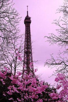 Imagem de paris, pink, and flowers