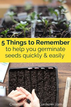 It's frustrating when you have trouble getting seeds to germinate. Here are a few tricks for how to germinate seeds quickly and evenly every time. #gardening #vegetablegarden #plants #seeds #planting Vegetable Garden Tips, Seed Germination, How To Dry Basil, Gardening Tips, Seeds, Vegetables, Plants, Food, Veggies