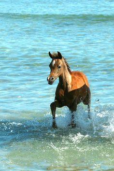 Beautiful foal. Equestrian LIfestyle Magazine
