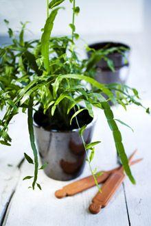 Lukijoiden parhaat viherkasvivinkit Maalla-lehden lukijat kertovat parhaat viherkasvivinkkinsä! http://kotiliesi.fi/puutarha/lukijoiden-puutarhat/lukijoiden-parhaat-viherkasvivinkit