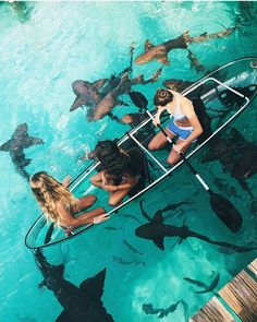 In a glass bottomed canoe boat, swimming with sharks. Photo: Kailin Kerzner, moodytoning