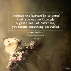 Perhaps the butterfly is proof that you can go through a great deal of darkness... - https://themindsjournal.com/perhaps-the-butterfly-is-proof-that-you-can-go-through-a-great-deal-of-darkness/