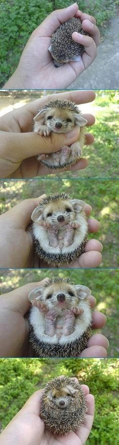 Hedgehogs you just can't help but love 'em