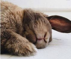 is it wrong to want to kiss this sweet little rabbit on its furry lips? I know, but it's so darn cuuuuute! Hamsters, Animals And Pets, Baby Animals, Funny Animals, Cute Animals, Funny Bunnies, Cute Bunny, Bunny Bunny, Funny Pets