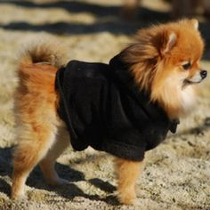 This looks exactly like my baby! Except he prefers his Burberry sweater. ;).