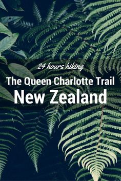 How to enjoy the best 24 hours on Queen Charlotte Track, NZ - Before going to New Zealand I wondered if it would be possible to only spend one day on the spectacular Queen Charlotte Track. The trail itself is beautiful, worth spending all the time you have hiking it, but there are some travellers who might not...