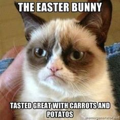 Grumpy Cat ate the Easter Bunny... For the best funny pics & jokes visit www.bestfunnyjokes4u.com/rofl-funny-pic-of-the-day-8/