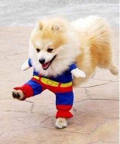 a  small superman : 0