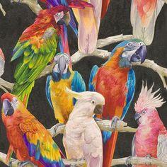 papegaai vogel behang blauw groen rood 823608