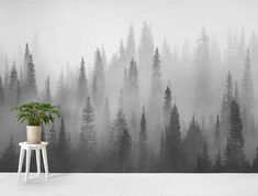 wall Murals Black And White - Smoky forest Wall mural. Forest Wallpaper, Wood Wallpaper, Photo Wallpaper, Wallpaper Ideas, Black And White Tree, Black And White Wallpaper, Misty Forest, Autumn Forest, Dark Forest