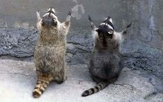The wall of the pious... The Funniest Animal Photos. Part 1 - AmO Images - AmO Images