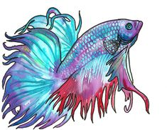 Choose your favorite betta fish paintings from millions of available designs. All betta fish paintings ship within 48 hours and include a money-back guarantee. Beta Fish Drawing, Fish Drawings, Animal Drawings, Betta Fish Tattoo, Betta Fish Tank, Fish Tanks, Caran D'ache, Siamese Fighting Fish, Salt Water Fish