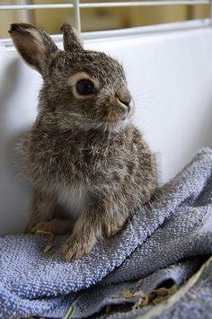 Fuzzy brown bunny