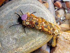 Caddisfly larva with addorned casing by Hubert Duprat