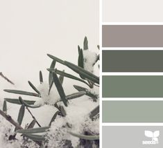frosted hues