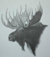Moose Pencil Sketch by waynejoldroydart on Etsy, $20.00