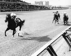Ruffian - led every race from the first pole to the last except in her tragic final race Most Beautiful Horses, All The Pretty Horses, Barrel Racing Horses, Horse Racing, Thoroughbred Horse, Clydesdale Horses, Breyer Horses, Magnificent Beasts, Horse Show Clothes