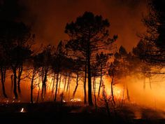 Terrorists lit European forest fires, eyes on WMDs – FSB chief ...