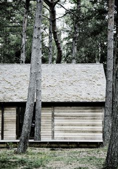 a cabin in the woods..