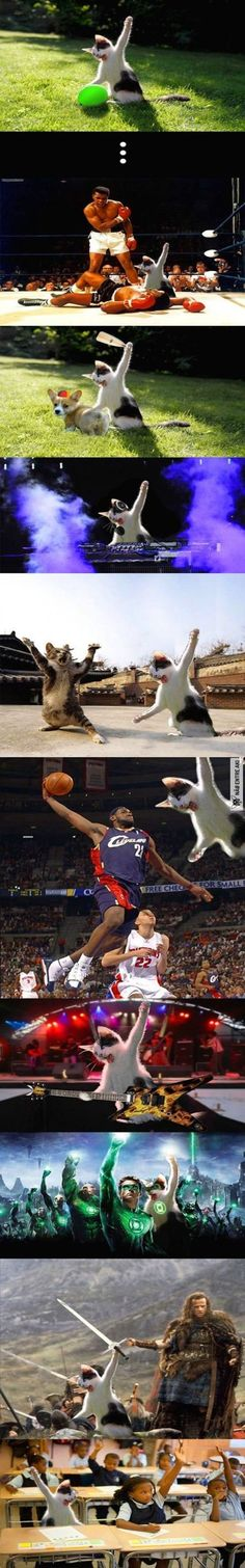 New funny pictures, photoshop and cats Cute Funny Animals, Funny Animal Pictures, Funny Cute, Funny Images, The Funny, Cute Cats, Hilarious, Funny Jokes, Funniest Pictures