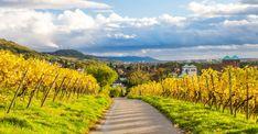 Idyllische Weinseligkeit im Weinbaugebiet Hessische Bergstraße #hessen #visithessen