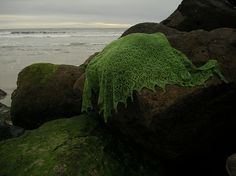 free-From Knitty.com: I fell in love with Estonian lace for its beautiful undulating forms. The curving lines and blossoms of this shawl, coupled with the spectacular green of the Fleece Artist yarn, also suggest the waving fronds and floats of an undersea kelp forest.