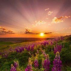 Sunrise over flowers in field