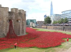 Were you inspired by the Tower of London poppy installation? So was I. - Find out where your Ancestors came from! - Display all your tree on your own #Genealogy Website, check it out!
